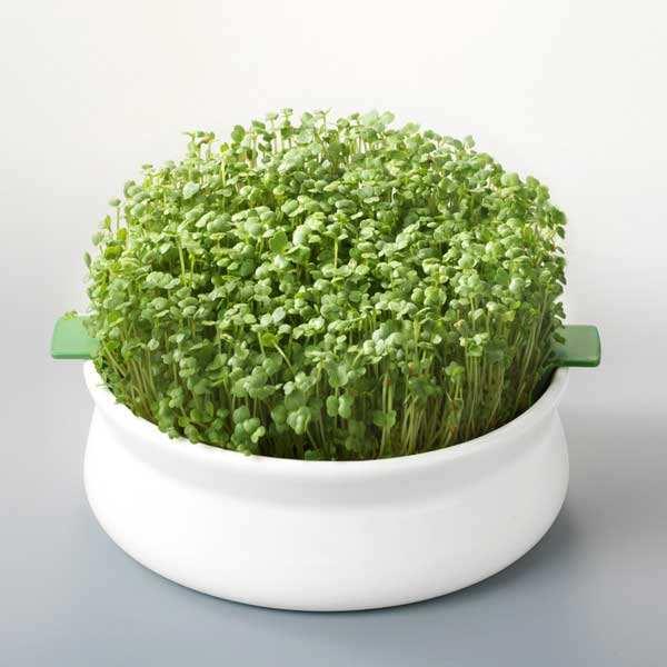 Germoir à graines mucilagineuses - Coupelle de germination