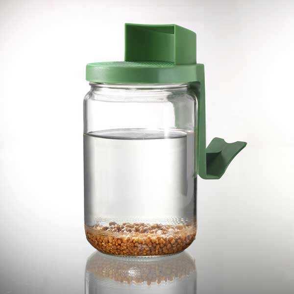 bocal en verre graines germées